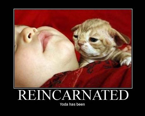 Yoda Lookalike