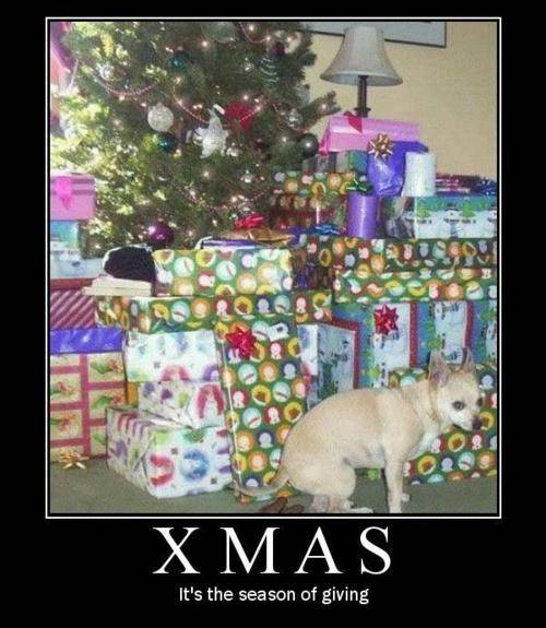 Dog lays a curler turd under the tree