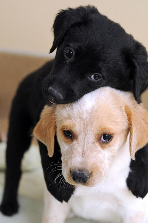 Cute puppies play together