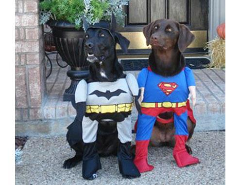 Dogs in Superman and Batman costumes