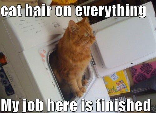 Ginger cat hair