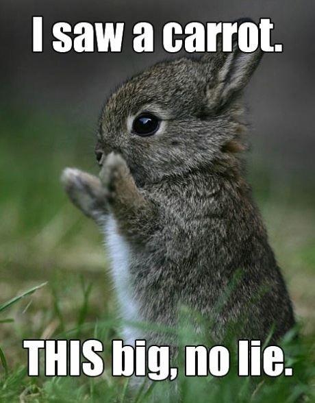 Cute bunny saw a carrot