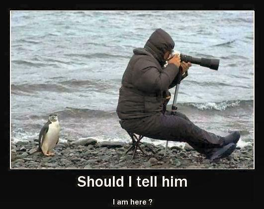 Penguin behind photographer