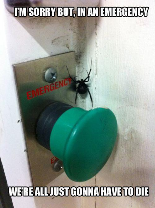 Scary spider on button