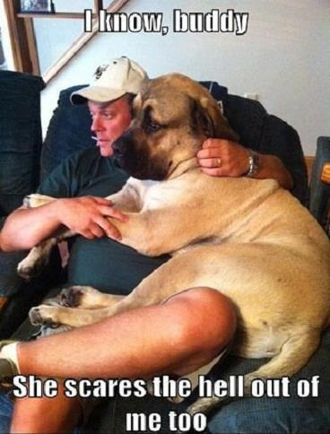 Big dog on lap